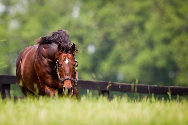 Ghostzapper at Adena Springs on 06.02.2011