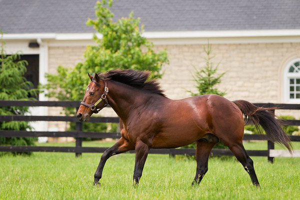 Ghostzapper at Adena Springs 6.02.2011mw