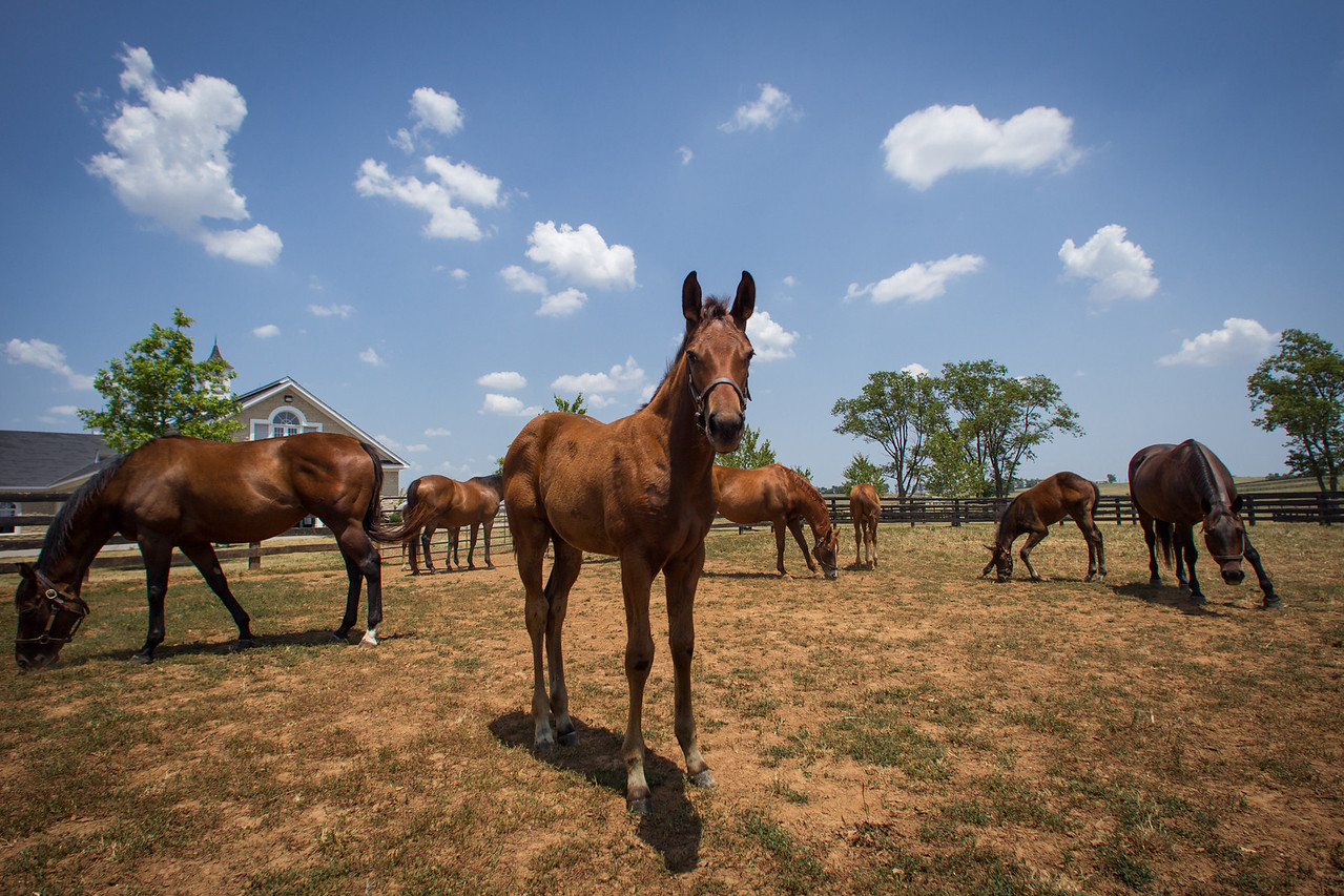 Light Green - Quality Road at 10 weeks old.  Turned out in a large field with several other mare and foals.