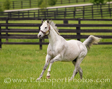 Macho Uno at Adena Springs 6.02.2011mw