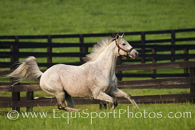 Macho Uno at Adena Springs on 5.31.2011