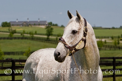 Macho Uno at Adena 6.17.2011mw