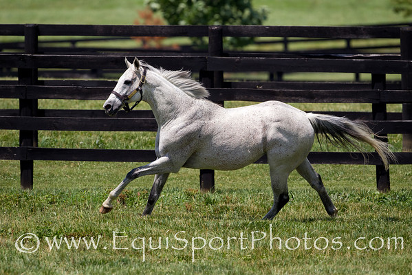 Macho Uno at Adena 6.21.2011mw