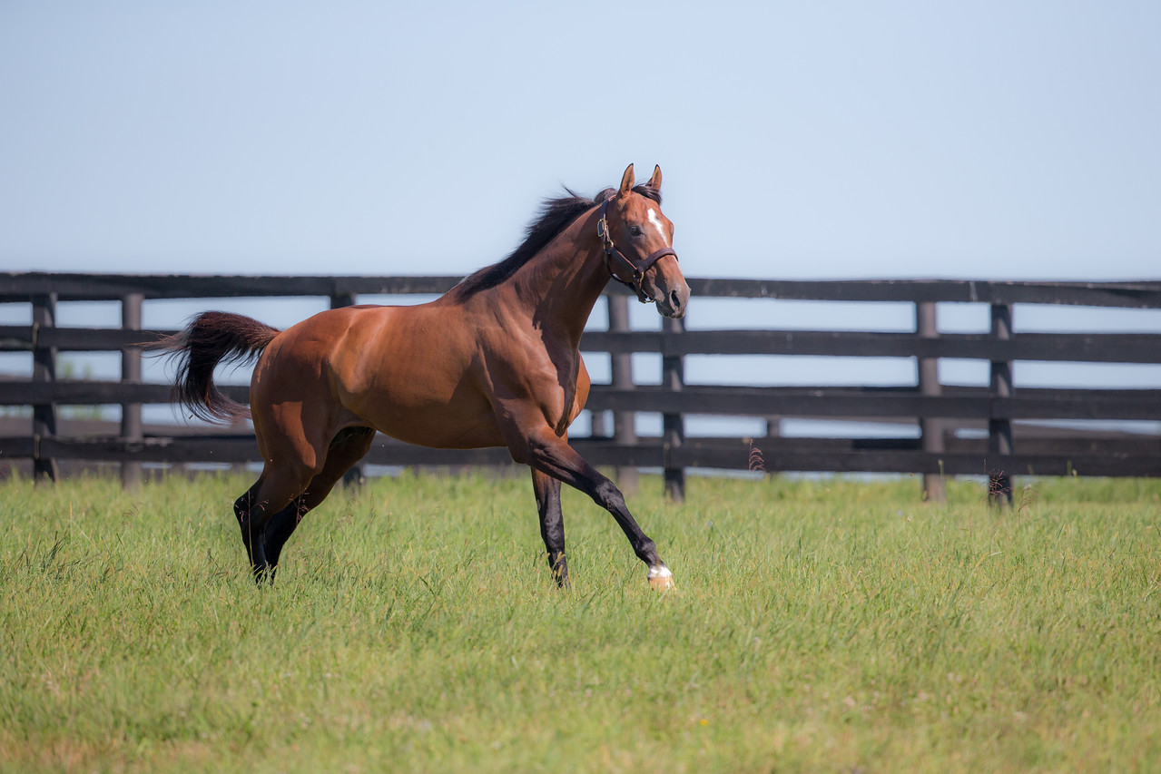 Mucho Macho Man at Adena Springs on 8.25.2015