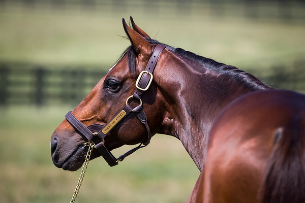 Point Of Entry at Adena 7.09.14.