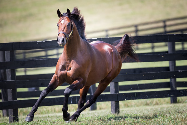 Point Of Entry at Adena Springs on 7.9.2014
