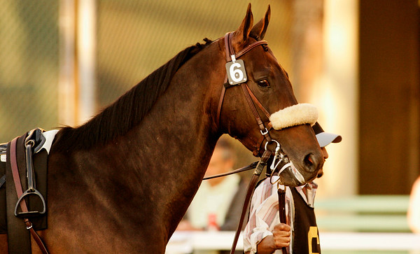 Silent Name in the 2007 Citation Handicap at Hollywood Park, Inglewood CA. 11.23.2007