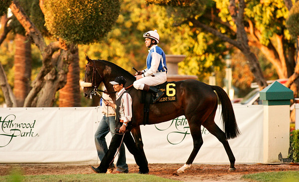 Silent Name, with Brice Blanc, in the 2007 Citation Handicap at Hollywood Park, Inglewood CA. 11.23.2007