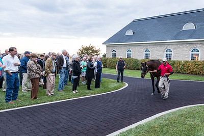Adena Open House and Stallion Show 10.27.17