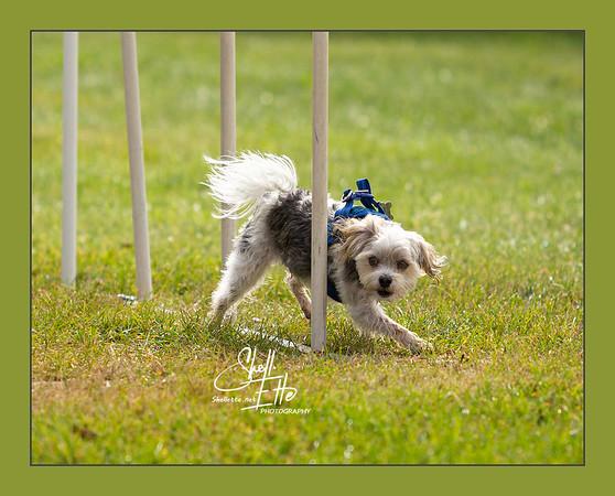 Bailey Weave Last Pole web