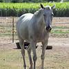 Horse2455