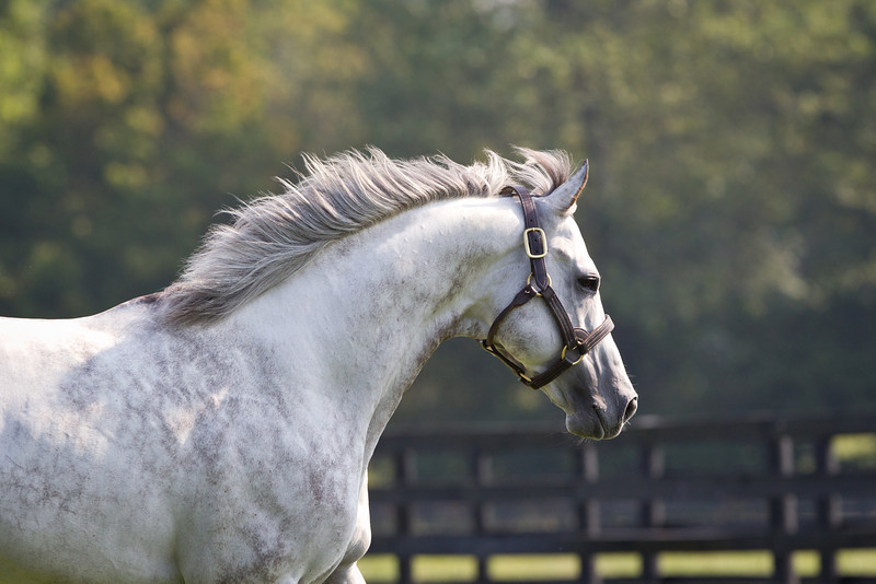 Flashy Bull at Airdrie Stud on 09.01.2011