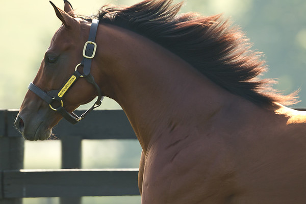 Majestic Perfection at Airdrie Stud on 09.01.2011