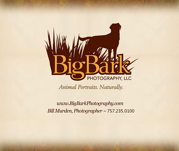 To return to our website, click on the Big Bark Photography link in upper left corner of gallery page. Or click here: http://www.bigbarkphotography.com.