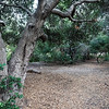 Balboa Park near Morley Field