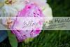 Alyssa & Larry Details-0001
