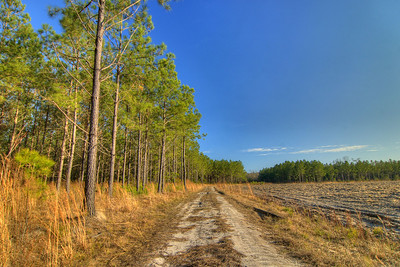 Photos of the Bellamy Tract shot for the American Timberlands Company in North Myrtle Beach, SC on Wednesday, January 16, 2013. Copyright 2013 Jason Barnette