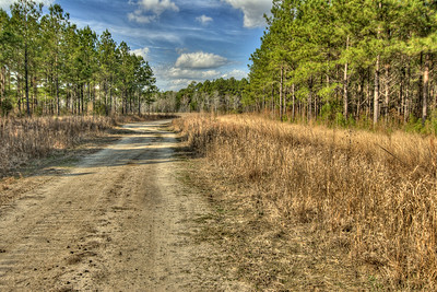 Photos of the Bellamy Tract shot in Longs, SC on Wednesday, January 16, 2013. Copyright 2013 Jason Barnette