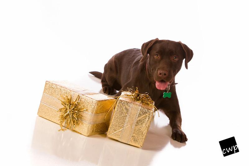 2012-Ginger Holiday 2012-Nov17-0677-Edit