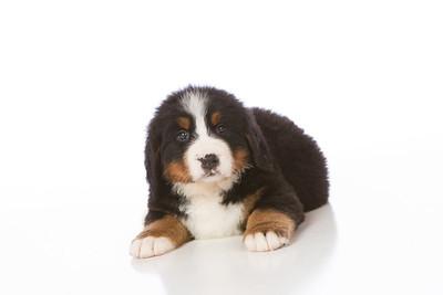 2013-Pearson Pups-Jun02-0258