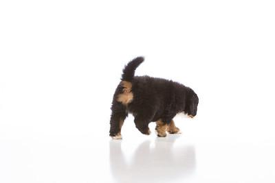 2013-Pearson Pups-Jun02-0272