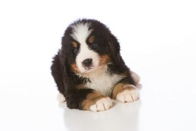 2013-Pearson Pups-Jun02-0244