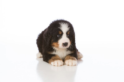2013-Pearson Pups-Jun02-0235