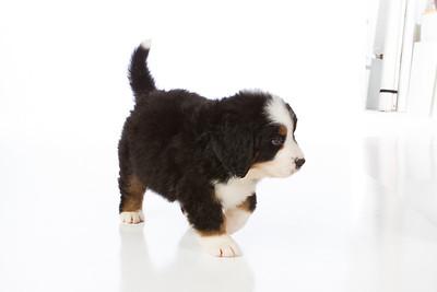 2013-Pearson Pups-Jun02-0249