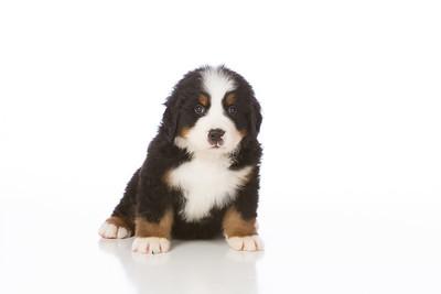 2013-Pearson Pups-Jun02-0263