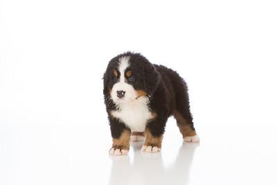 2013-Pearson Pups-Jun02-0269