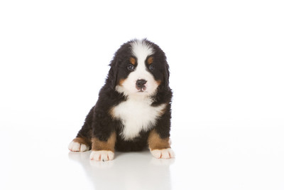 2013-Pearson Pups-Jun02-0264