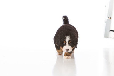 2013-Pearson Pups-Jun02-0273