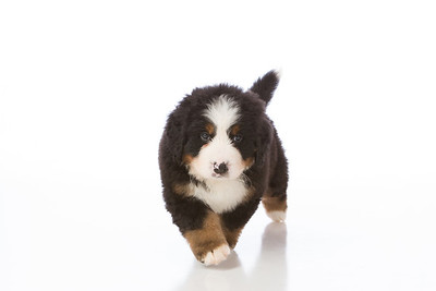 2013-Pearson Pups-Jun02-0226