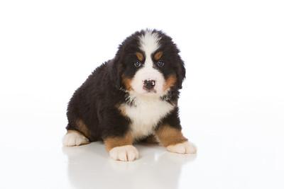 2013-Pearson Pups-Jun02-0215