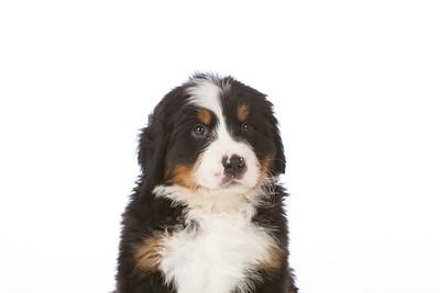 2013-Pearson Pups-Jun02-0221