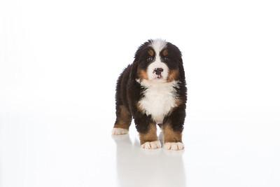 2013-Pearson Pups-Jun02-0230