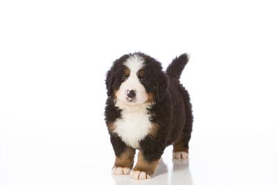 2013-Pearson Pups-Jun02-0225