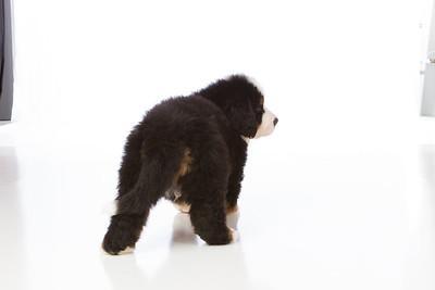 2013-Pearson Pups-Jun02-0268