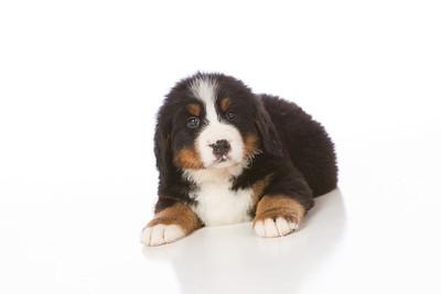 2013-Pearson Pups-Jun02-0259