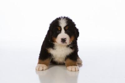 2013-Pearson Pups-Jun02-0214