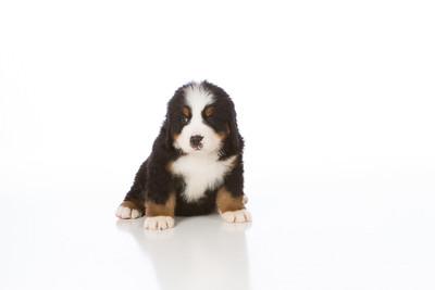 2013-Pearson Pups-Jun02-0266