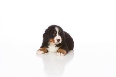 2013-Pearson Pups-Jun02-0252