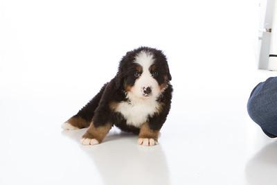 2013-Pearson Pups-Jun02-0223