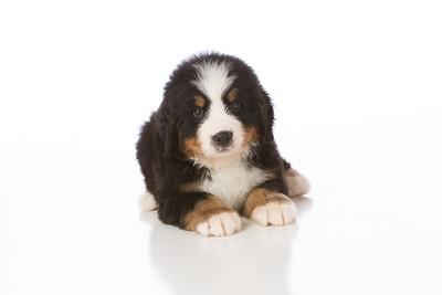 2013-Pearson Pups-Jun02-0237
