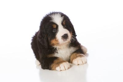 2013-Pearson Pups-Jun02-0242