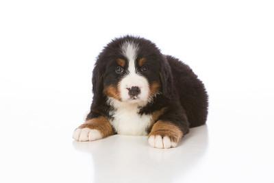 2013-Pearson Pups-Jun02-0255