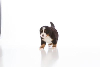 2013-Pearson Pups-Jun02-0276