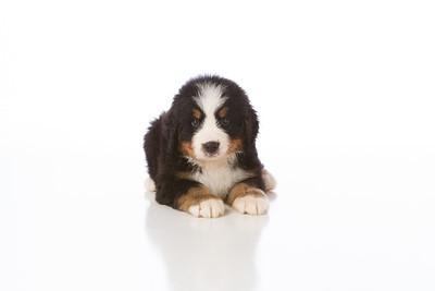 2013-Pearson Pups-Jun02-0239