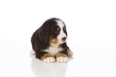 2013-Pearson Pups-Jun02-0236