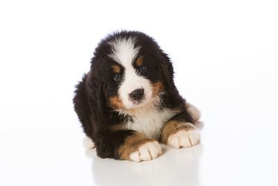 2013-Pearson Pups-Jun02-0241